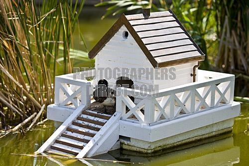 Duck house pets pinterest for House duck