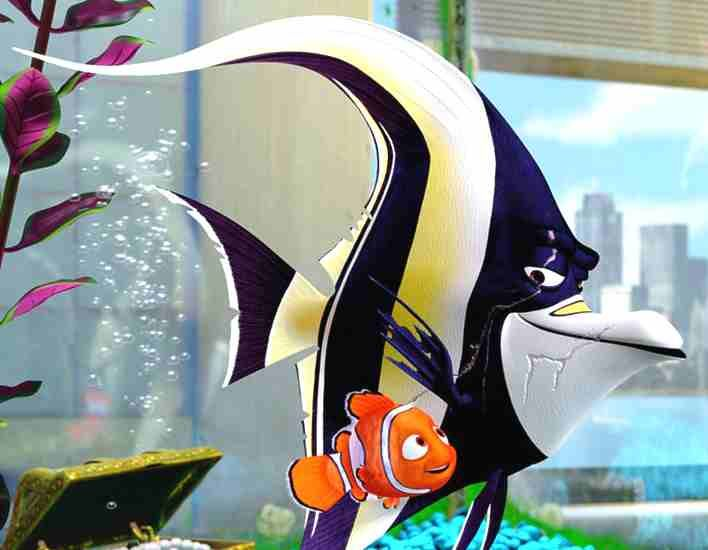Nemo gill nemo birthday party ideas pinterest for Finding nemo fish