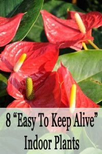 8 easy to keep alive indoor plants gardening pinterest for Easy to keep indoor plants