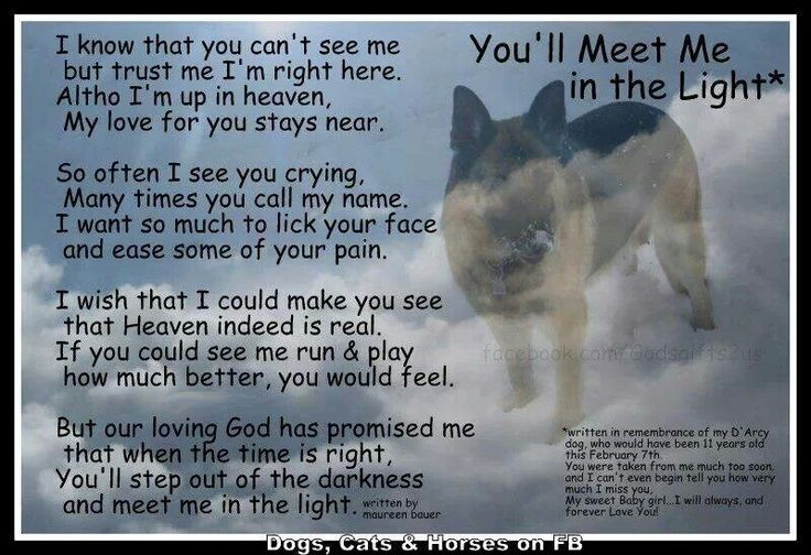 Bereavement pets poems quotes lol rofl com