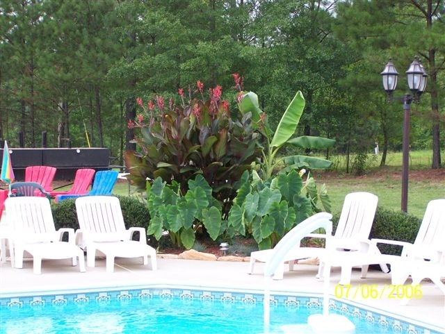 Plants around pools bing images pool landscaping for Garden elephant pool