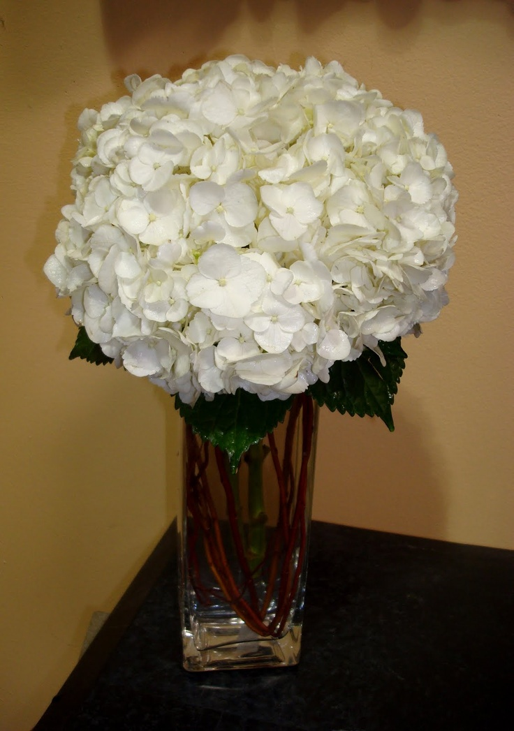 White hydrangeas square vase fleurs pinterest