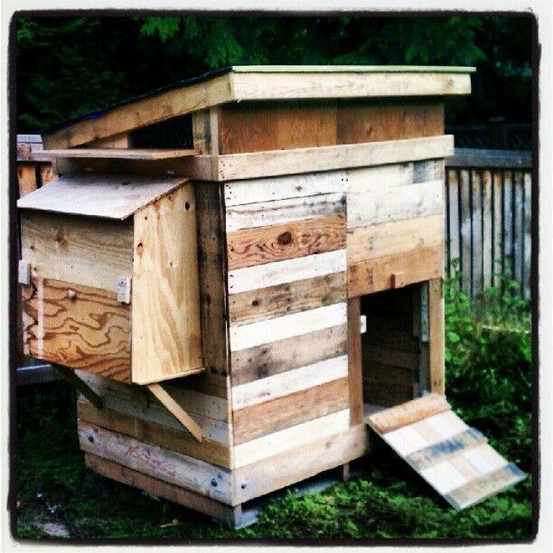 Pallet chicken coop hen love pinterest for Pallet chicken coup