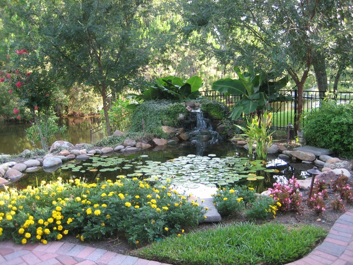 Water garden stunning outdoor garden plant life for Beautiful gardens landscaping