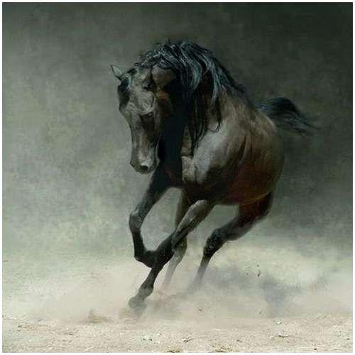 Beauty http://amazingdata.com/arabian-horses/