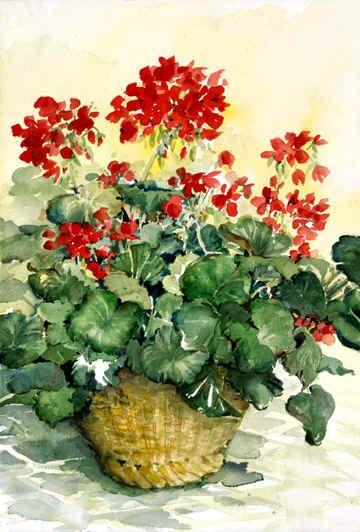 Hoa Phong Lữ - Geranium