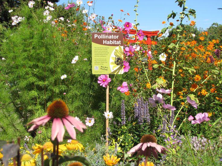 pollinator garden School Garden Pinterest