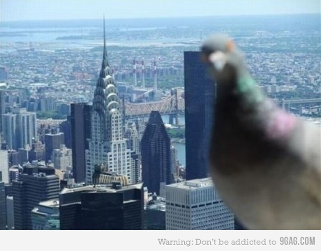 pigeon photobomb!
