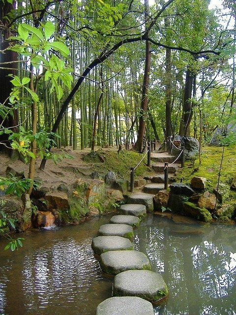 Forest Pond Walkway Beautiful Places Pinterest