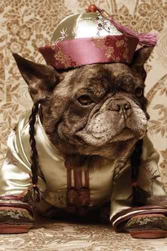 marcel - the Nars dog.
