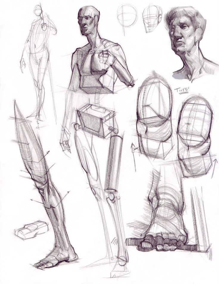 Character Design Book Free Download : Figure drawing sketches imgkid the image kid