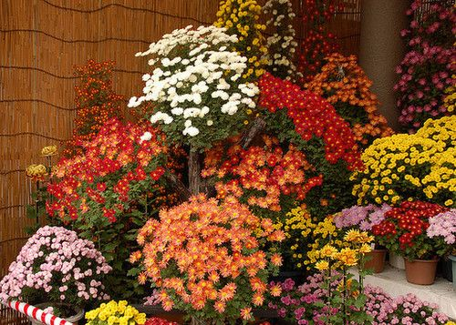Pin by marguerite thompson on autumn 39 s glory pinterest - Potted autumn flowers ...