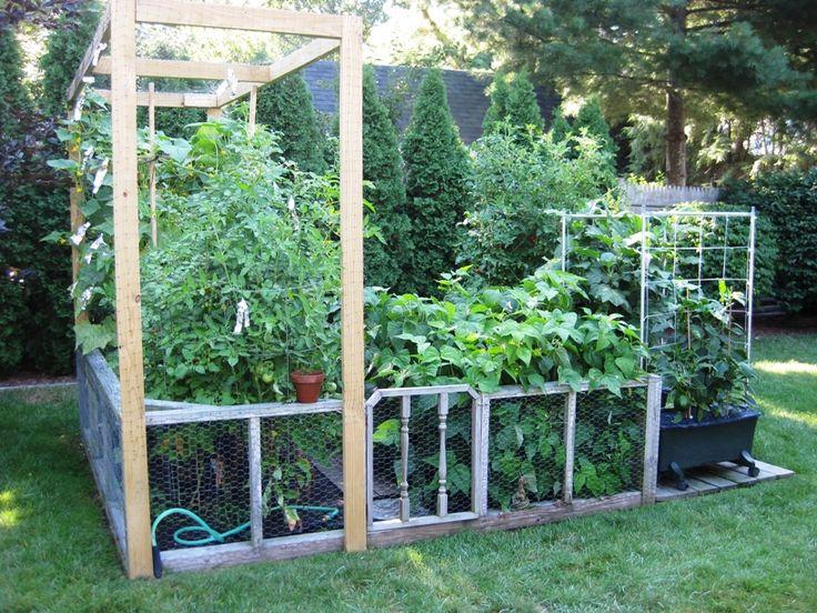 Chicken Wire Fencing Gardening Pinterest
