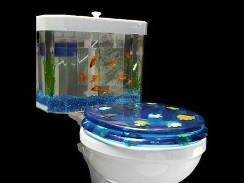 fish tank toilet humor amusement pinterest