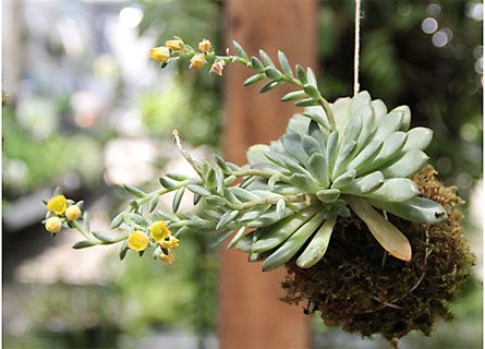 String Gardening with Free People