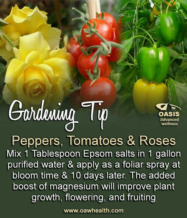 Epsom Salts Outdoor Garden Pinterest