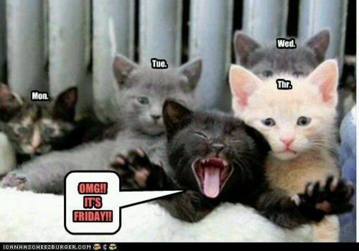 OMG! its friday | Cats. Loves of my Life. | Pinterest
