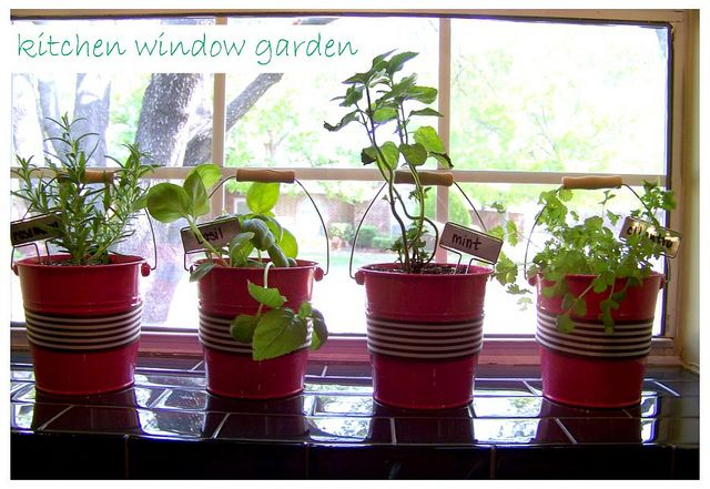 fresh herb in kitchen window in red little buckets