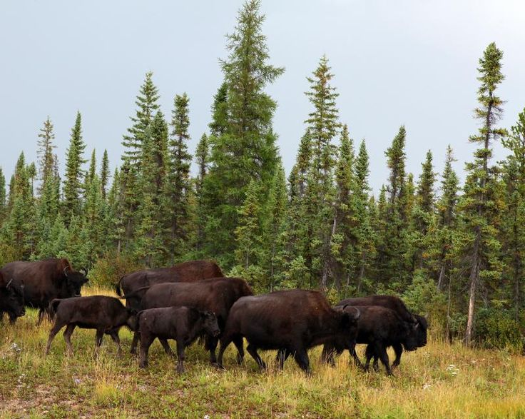 how to get to wood buffalo national park