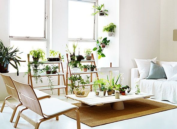 Decorating with house plants indoor garden pinterest - Decorate home with plants ...