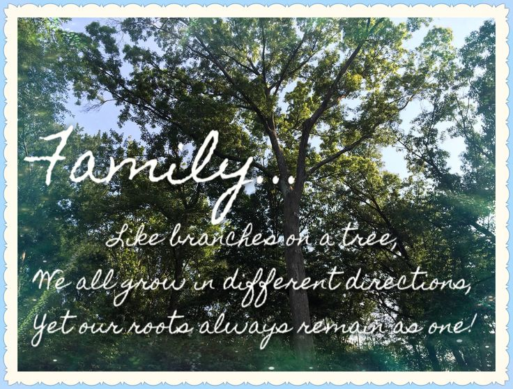 Quotes About Our Backyard :  yard at our 2014 Family Reunion and inserted the quote about families
