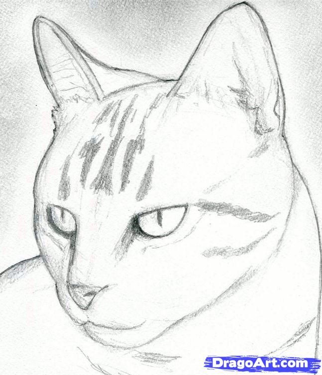 How to draw kitty cat  Hellokidscom