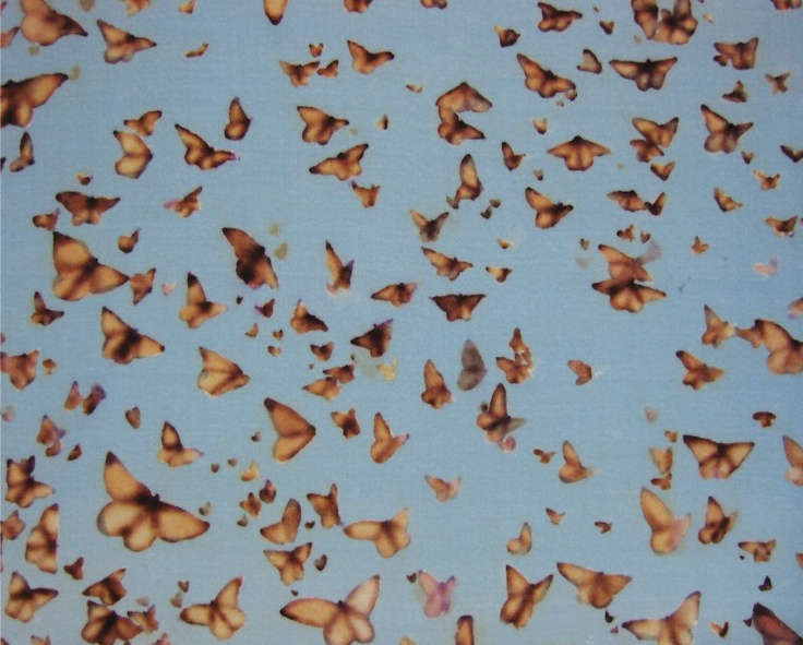 Swarm Of Butterflies Tumblr swarm of butterflies |...