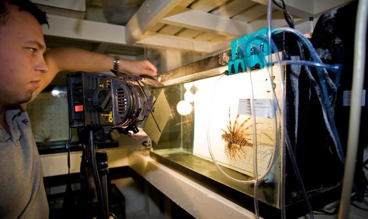 Marine Biology Lab   Campus   Pinterest
