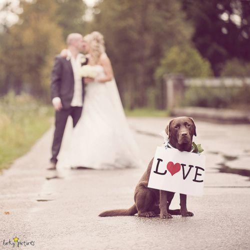 Include dog in wedding photos