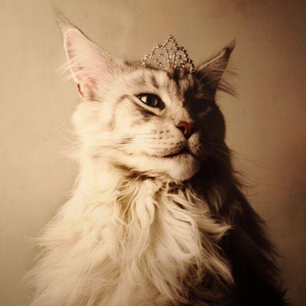 cat crown | Cat's power !! | Pinterest