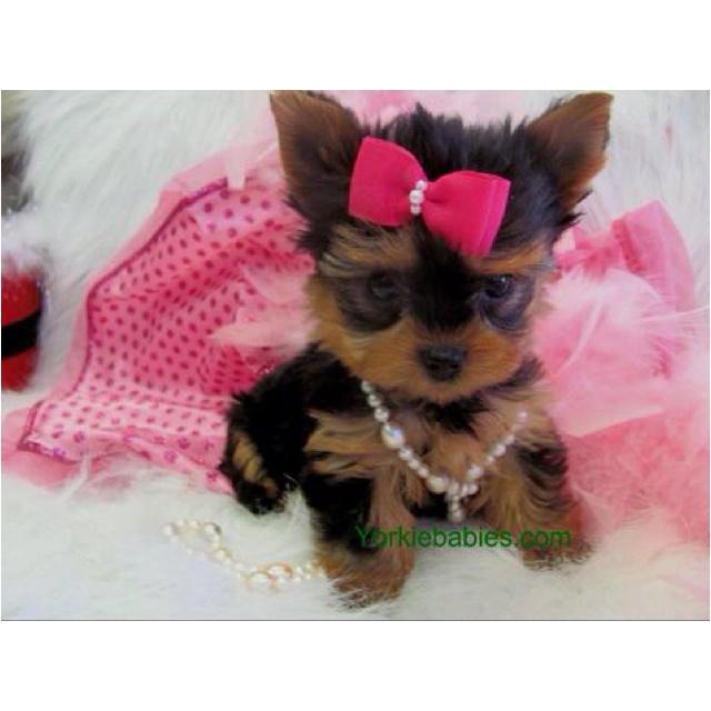Puppy swag...