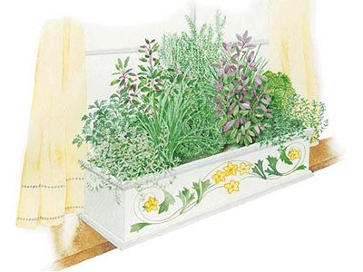 Indoor Herb Box Delectable Of Indoor Herb Garden Box Image