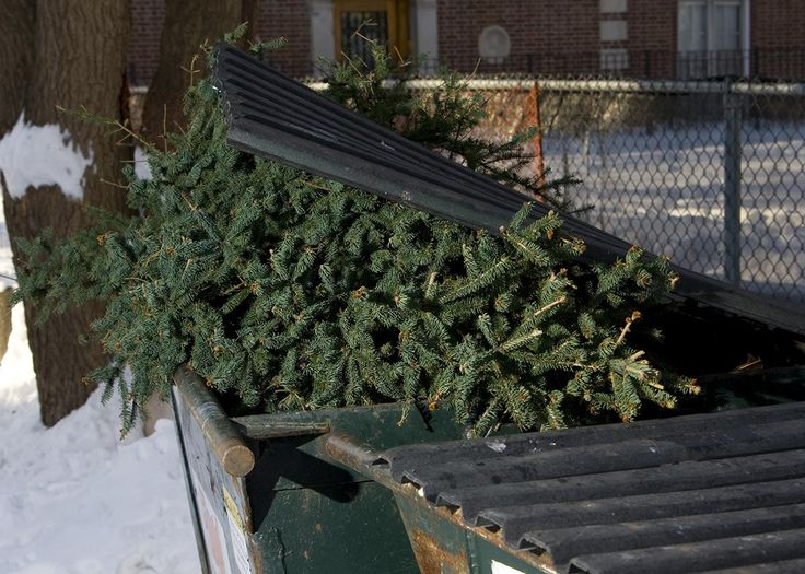 10 uses for your dead christmas tree repurpose it pinterest