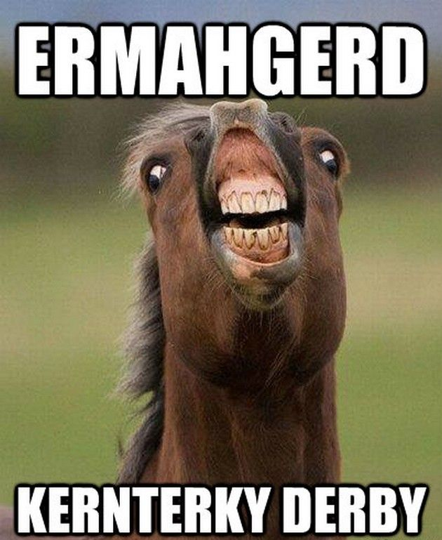 Funny Horse Meme www.elroseequine.com | Funny Horses ...