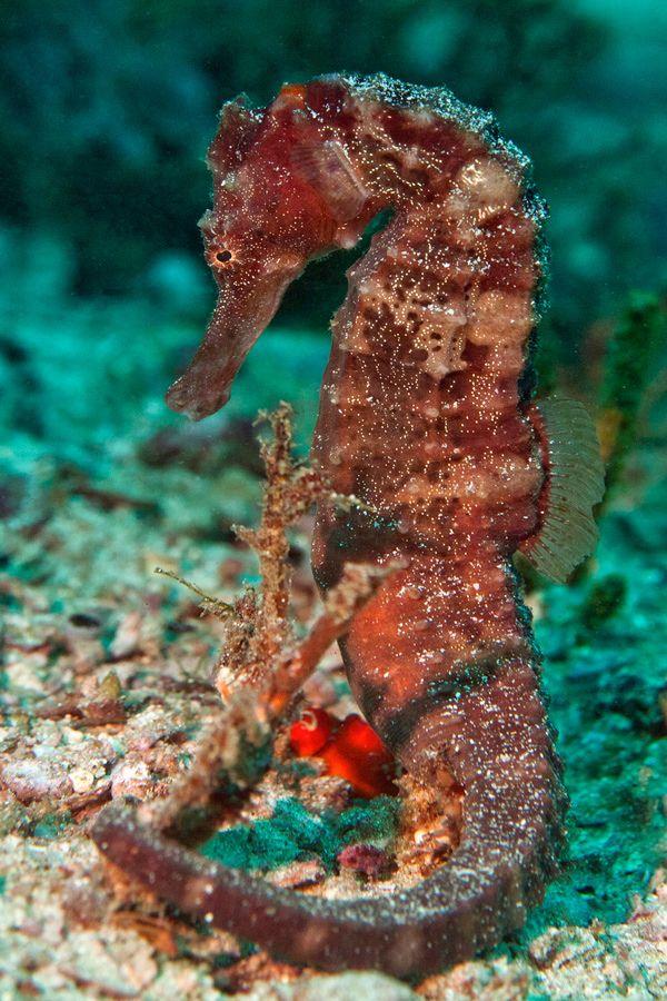 Beautiful seahorse images