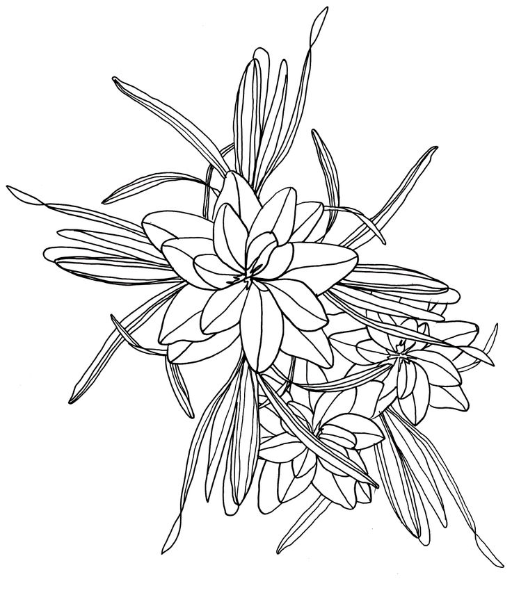 Flower Leaf Line Drawing : Line drawing flowers and leaves drawings pinterest