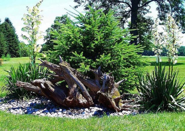 Landscaping With Driftwood : Driftwood and rocks garden art