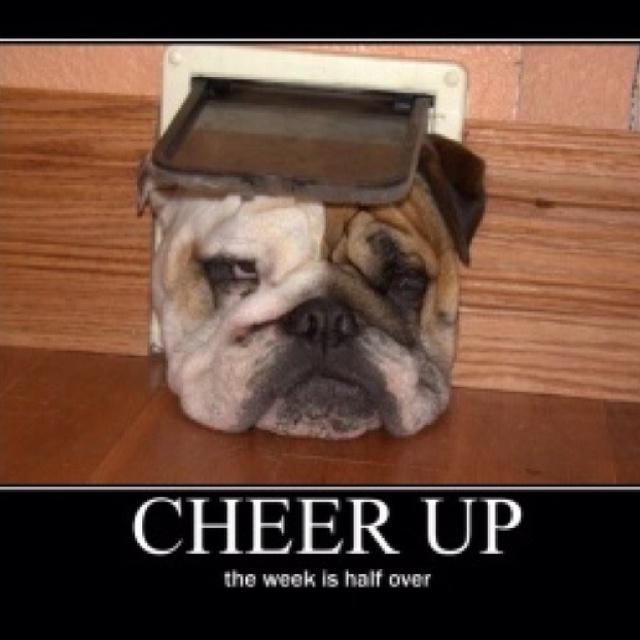 Cheer up | Funny stuff | Pinterest