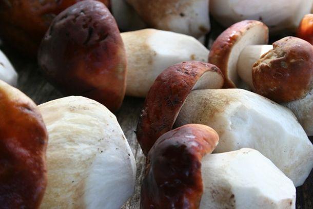 Wild Mushroom Soup with Mascarpone | Image courtesy of Fungi Perfecti | Recipe from Eugenia Bone, expert forager, chef, and author of Mycophilia