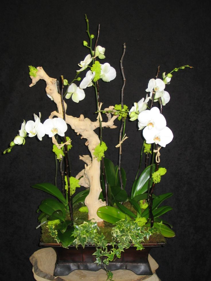 Google Image Result for http://www.paradisegiftsandflowers.com/images/Lalas_picture_006.jpg