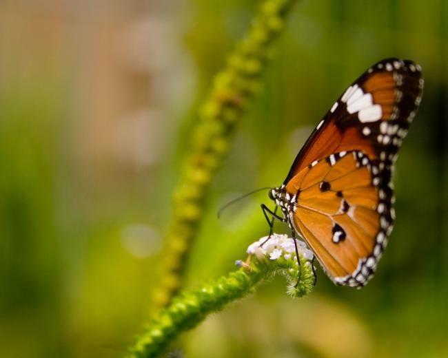 Картинки бабочек красивых цветных - d6