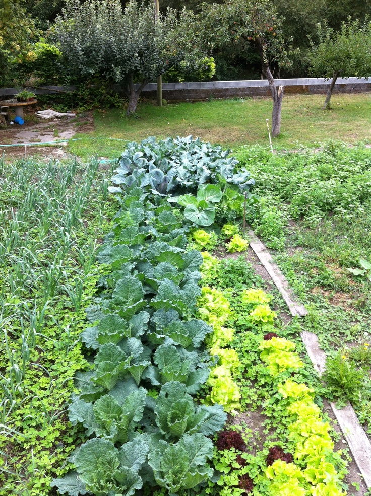 the perfect vegetable garden green life pinterest
