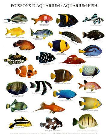 Freshwater aquarium fish chart fish tanks pinterest for Freshwater fish chart