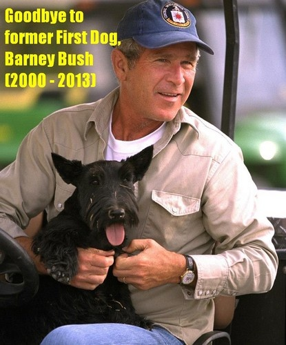 Images Of Bush S Dog Freddy