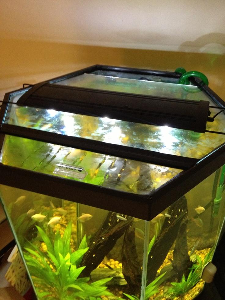 My DIY glass hexagon aquarium hood Animals Pinterest