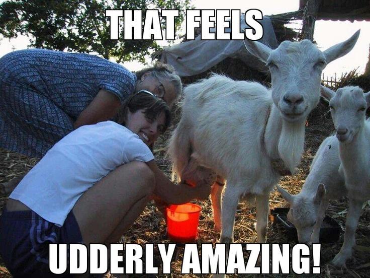 Funny animal pun meme. | Animal puns | Pinterest