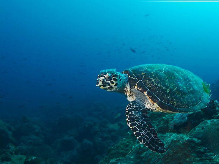 Deep ocean sea life bing images amazing ocean pinterest for Amazing ocean images