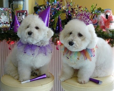 Image result for new year animals