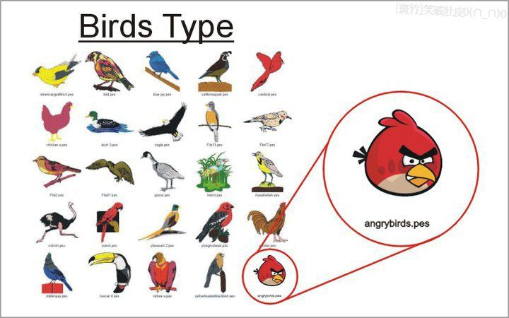 types of birds essay Essaytyper types your essay in minutes oh no it's finals week and i have to finish my essay immediately.