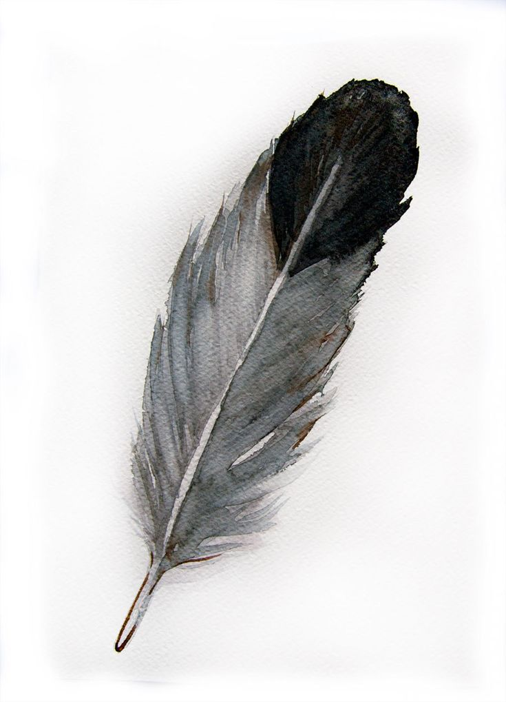 Watercolor Feather Watercolored feather-O...
